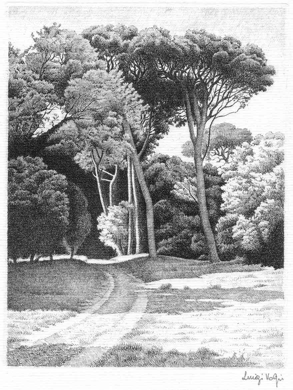 Pineta di S. Rossore (Pisa) - 17x13 cm - 1992 - acquaforte