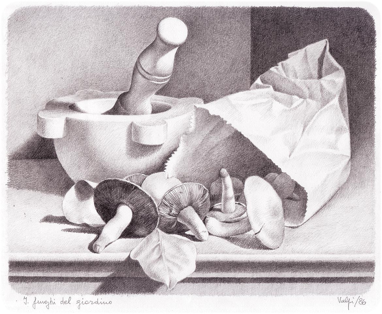 I funghi del giardino - 19x24 cm - 1986 - matita su carta