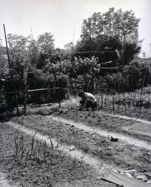 Luigi Volpi nell'orto della Cascina Barona - Milano - fine anni '70